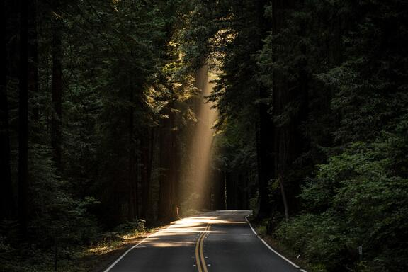 A sunlit road through a forest.